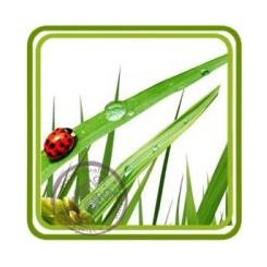 Свежескошенная трава - отдушка парфюмерно-косметическая
