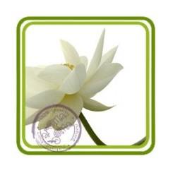 Цветы лотоса - отдушка парфюмерно-косметическая